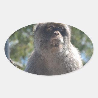 Barbary Ape Oval Sticker