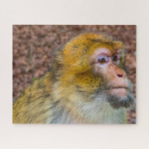 Barbary Apes. Jigsaw Puzzle