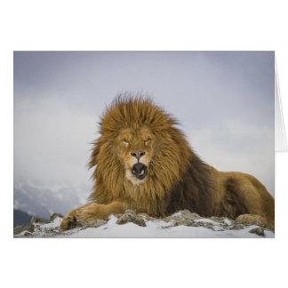 Barbary Lion Card