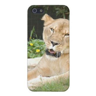 Barbary Lion i Cover For iPhone SE/5/5s