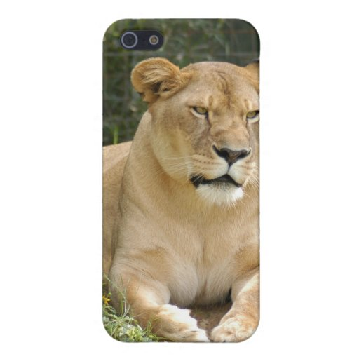 Barbary Lion iPhone Case Case For iPhone 5/5S
