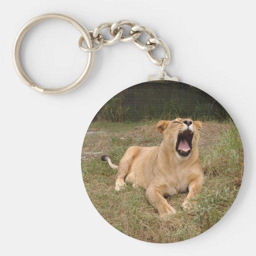 Barbary Lion-nap-002 Llavero Redondo Tipo Pin