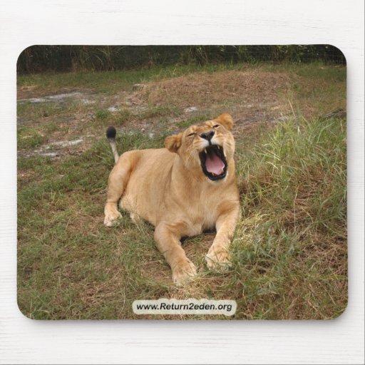Barbary Lion-nap-005 Mousepads