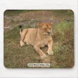 Barbary Lion-nap-007 Tapete De Ratones