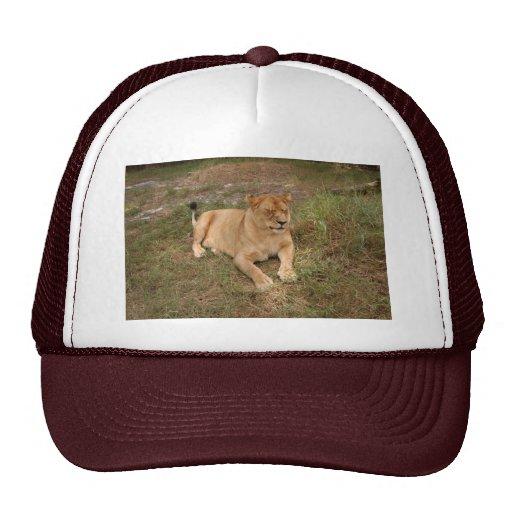 Barbary Lion-nap-007 Trucker Hat