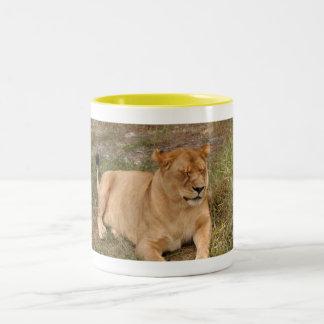 Barbary Lion-nap-007 Two-Tone Coffee Mug