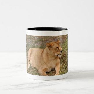 Barbary Lion-nap-008 Two-Tone Coffee Mug