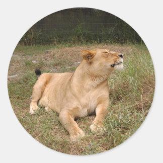 Barbary Lion-nap-010 Classic Round Sticker