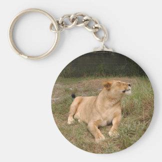 Barbary Lion-nap-010 Llavero Redondo Tipo Pin