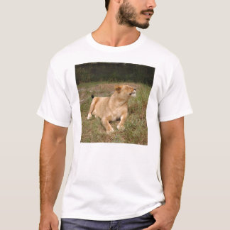 Barbary Lion-nap-010 T-shirt