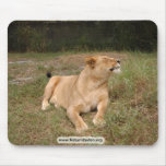Barbary Lion-nap-010 Tapetes De Ratones