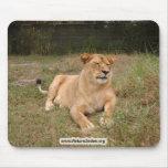 Barbary Lion-nap-012 Alfombrilla De Ratones