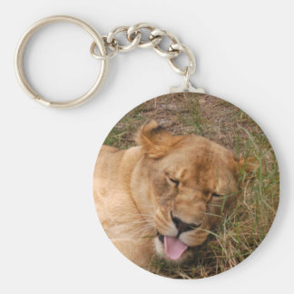 Barbary Lion-nap-017 Llavero Redondo Tipo Pin
