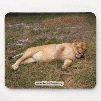 Barbary Lion-nap-017 Mouse Pad
