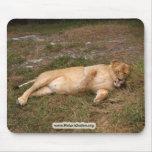 Barbary Lion-nap-017 Tapete De Ratón