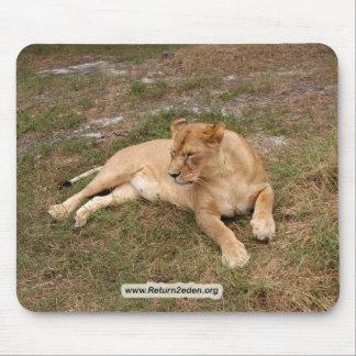 Barbary Lion-nap-018 Mouse Pad