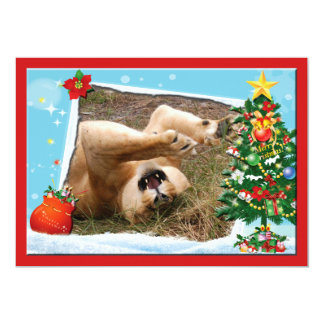 Barbary Lion-Nap-c-2 copy Card