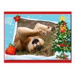 Barbary Lion-Nap-c-2 copy Post Cards