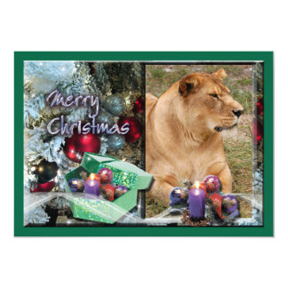 Barbary Lion-Nap-c-51 copy Card