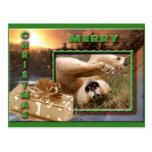 Barbary Lion-Nap-c-67 copy Postcard