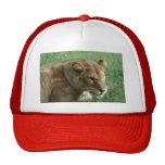 Barbary Lion-set-1-004 Trucker Hat