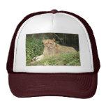 Barbary Lion-set-1-005 Trucker Hat