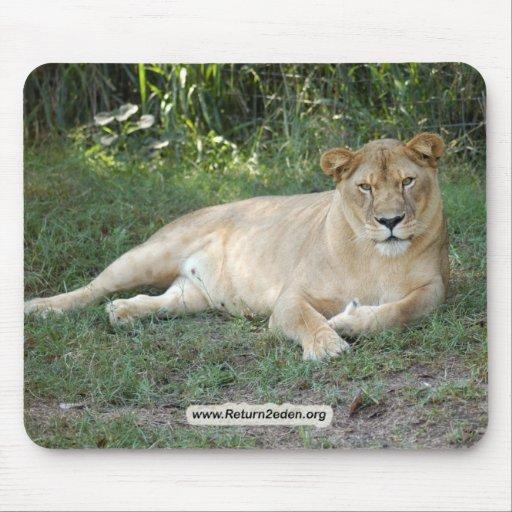 Barbary Lion-set-1-009 Alfombrillas De Raton