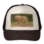 Barbary Lion-set-1-017 Trucker Hat