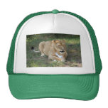 Barbary Lion-toy-006 Trucker Hat