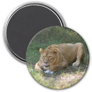 Barbary Lion-toy-015 Imán Redondo 7 Cm