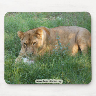 Barbary Lion-toy-024 Mouse Pad