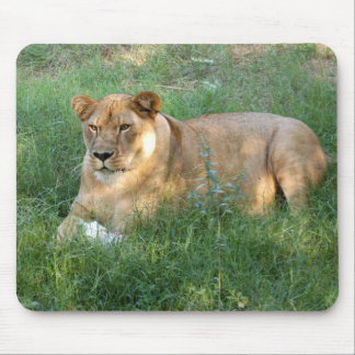 Barbary Lion-toy-025 Mouse Pad