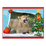 Barbary Lion-Toy-c-2 copy Post Cards