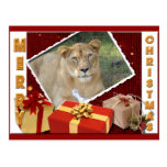 Barbary Lion-Toy-c-65 copy Post Cards