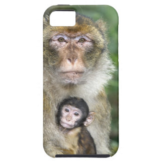 Barbary Macaque . Adulte with babyMacaca iPhone SE/5/5s Case