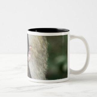 Barbary Macaque . Adulte with babyMacaca Two-Tone Coffee Mug