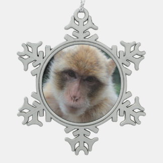 Barbary macaque ape portrait ornament