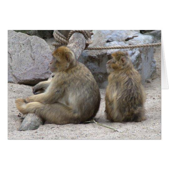 Barbary macaque card