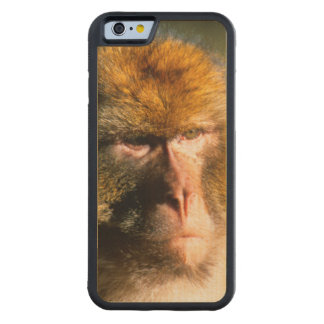 Barbary Macaque (Macaca Sylvanus) Portrait Carved Maple iPhone 6 Bumper Case