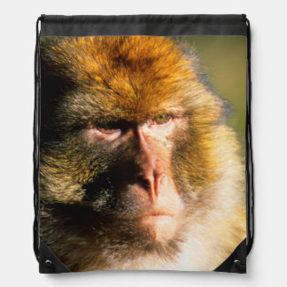 Barbary Macaque (Macaca Sylvanus) Portrait Drawstring Backpack
