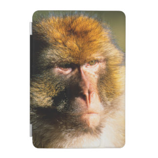 Barbary Macaque (Macaca Sylvanus) Portrait iPad Mini Cover