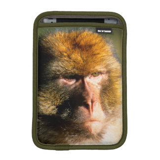 Barbary Macaque (Macaca Sylvanus) Portrait iPad Mini Sleeve