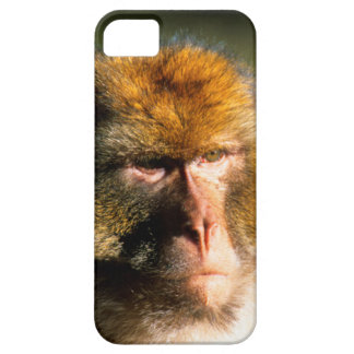 Barbary Macaque (Macaca Sylvanus) Portrait iPhone SE/5/5s Case