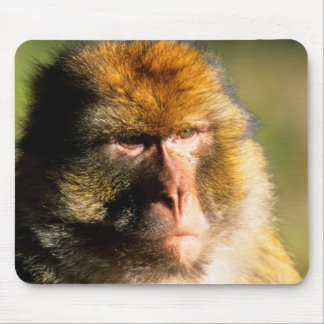 Barbary Macaque (Macaca Sylvanus) Portrait Mouse Pad