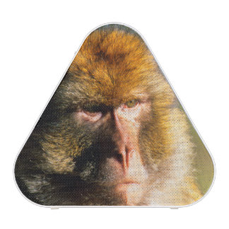 Barbary Macaque (Macaca Sylvanus) Portrait Speaker