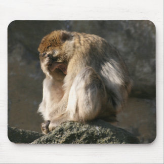 Barbary Macaque Mouse Pad