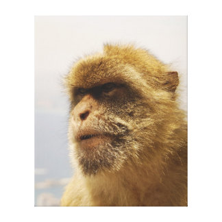Barbary Macaques in Gibraltar Monkey Face Canvas Print