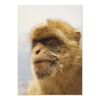 Barbary Macaques in Gibraltar Monkey Face Card