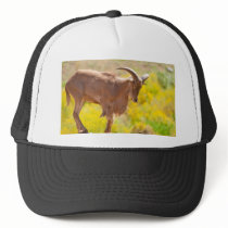 Barbary sheep trucker hat