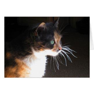 Barbas del gato de calicó tarjeta de felicitación